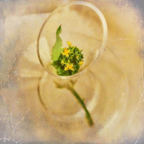 Turnip Greens by LoryC