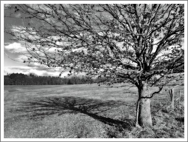 Apple Tree by kw