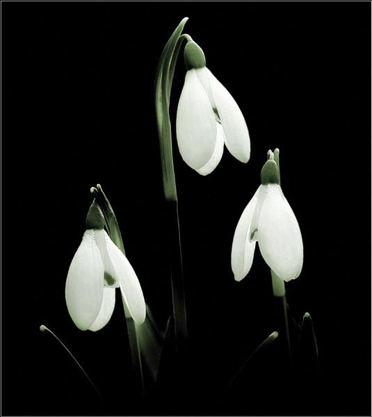 Winter Lanterns. by bricurtis