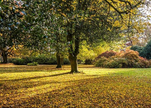 Autumn Colours by kdw