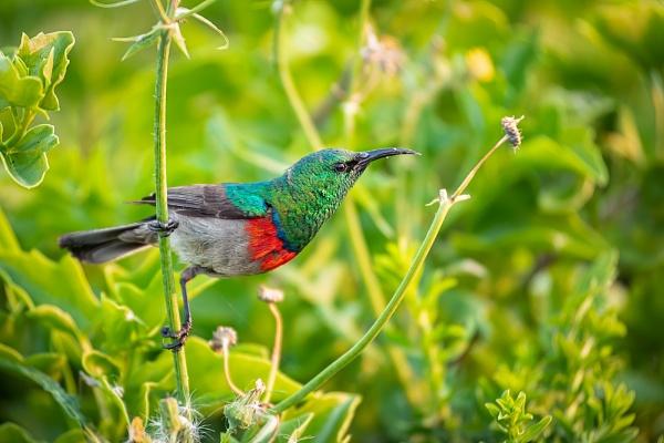 Spring colour by sherlob