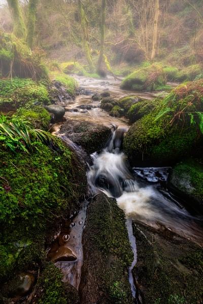 A little touch of rainforest by douglasR