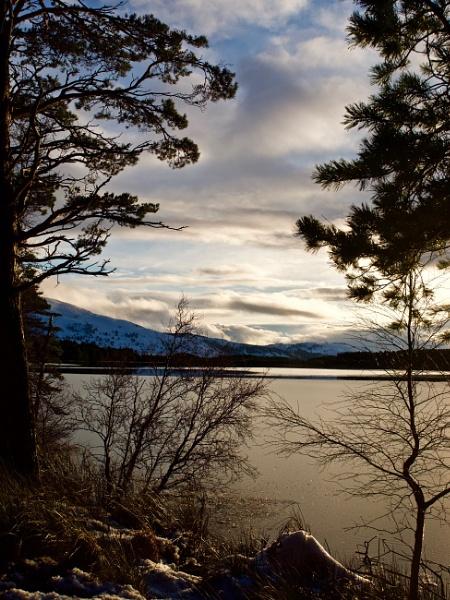 Loch Garten by altosaxman