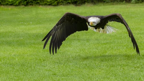 Liberty in flight by mohikan22