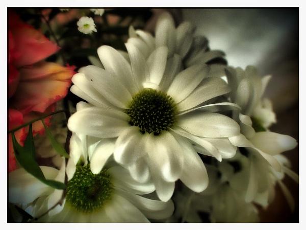 WHITE FLOWER. by kojack