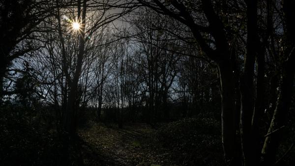 Woods Chargrove Lane by woodini254