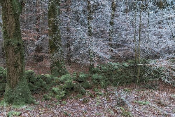 The crisp winter by BillRookery