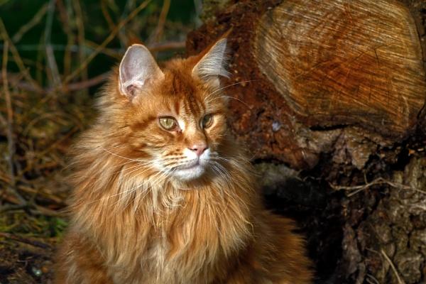 Jasper by Mable