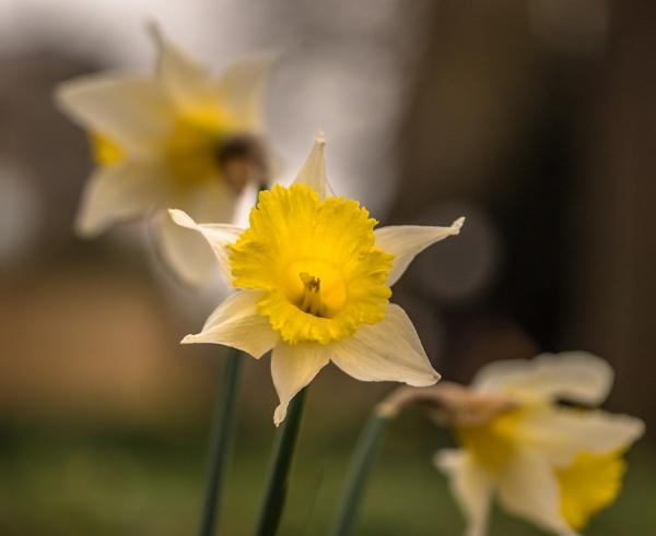 Springtime by Bore07TM
