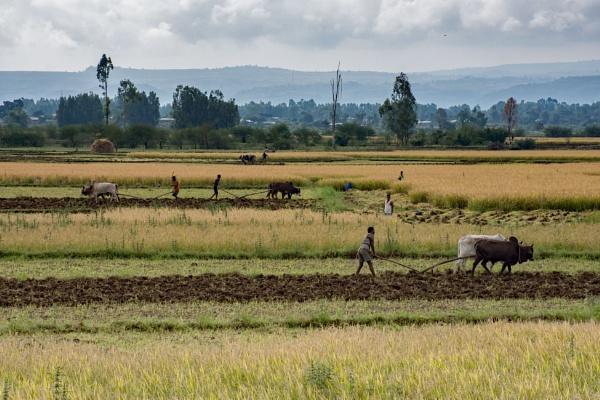 Farming - N. Ethiopia (1) by barryyoungnz