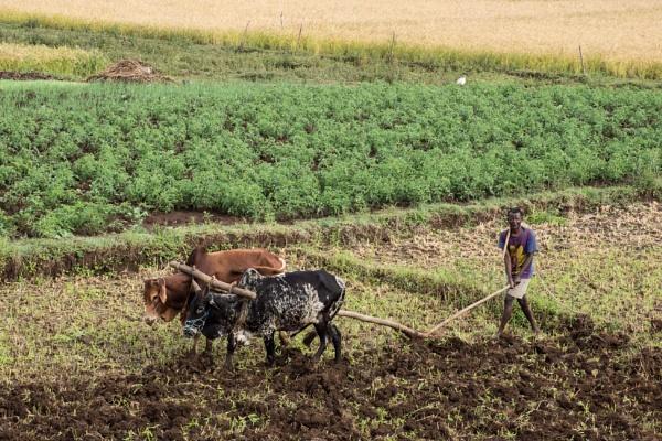 Farming - N. Ethiopia (2) by barryyoungnz