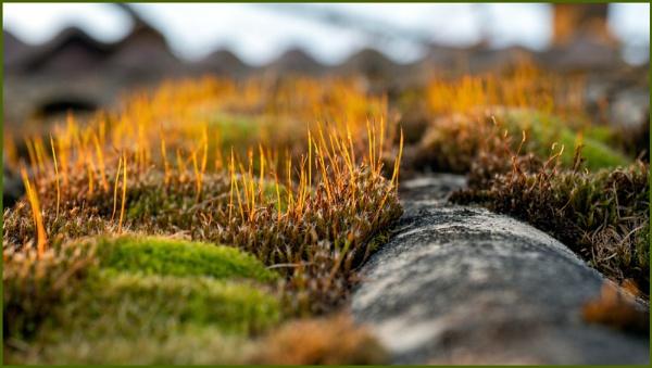 Field Of Moss by kw
