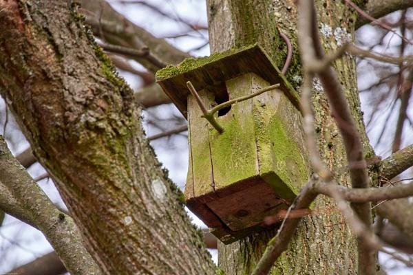 Nesting box - 1 by LotaLota