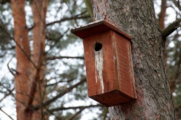 Nesting box - 3 by LotaLota