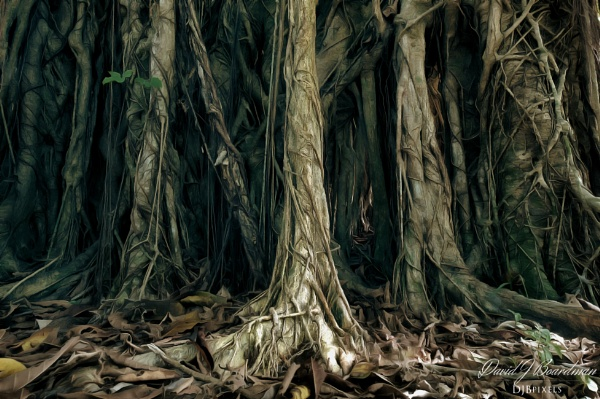 Banyan Tree - (Forest as from the Lord of the rings) by DBoardman