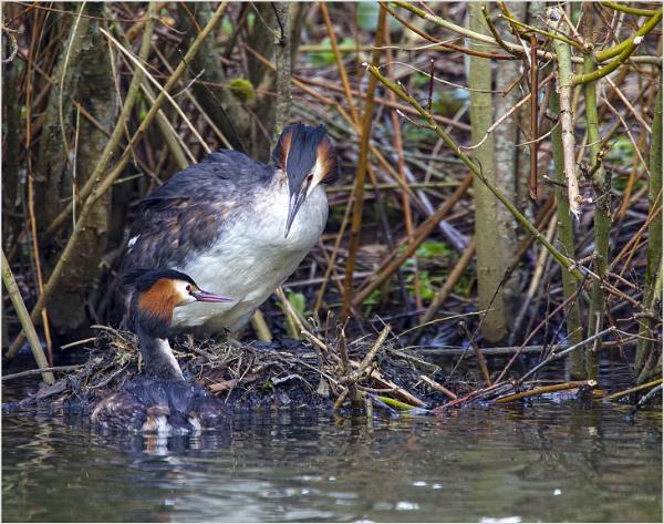 Gaurding the nest by AnnetteK
