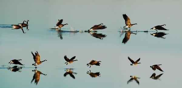 Flight Sequence by jrsundown