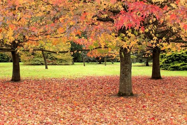 Autumn Leaves 1 by pamelajean
