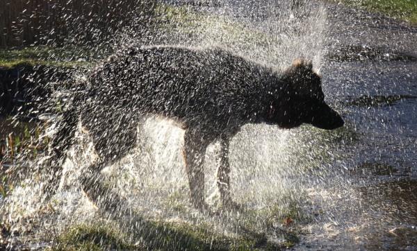 Splish Splash by SUE118