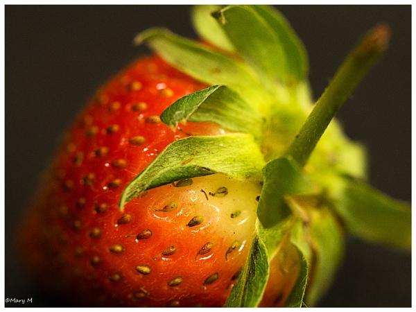 Strawberry by marshfam19