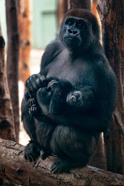 Motherhood by markst33