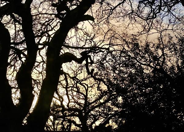 Evening light by nclark