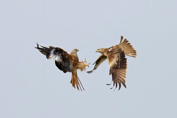 Red Kite Friction by Steveo28