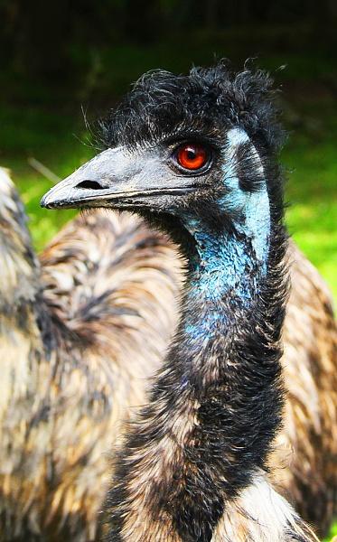 EMU by SOUL7