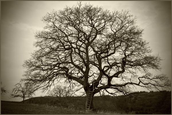 The Oak - 2 by kw