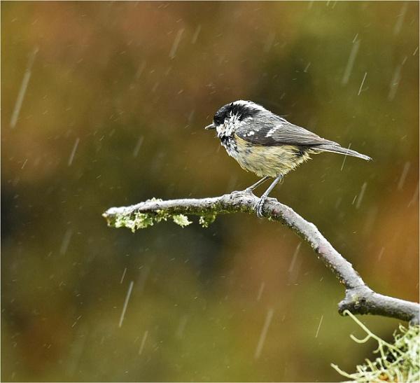 Wet Wet Wet by MalcolmM