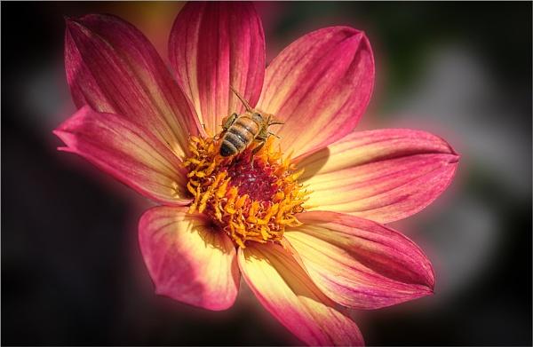 Summer Memory by photographerjoe