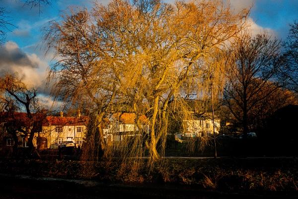 Glowing Tree by terra