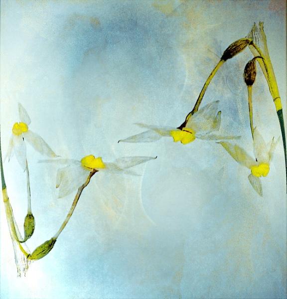 Spring Flowers by helenlinda
