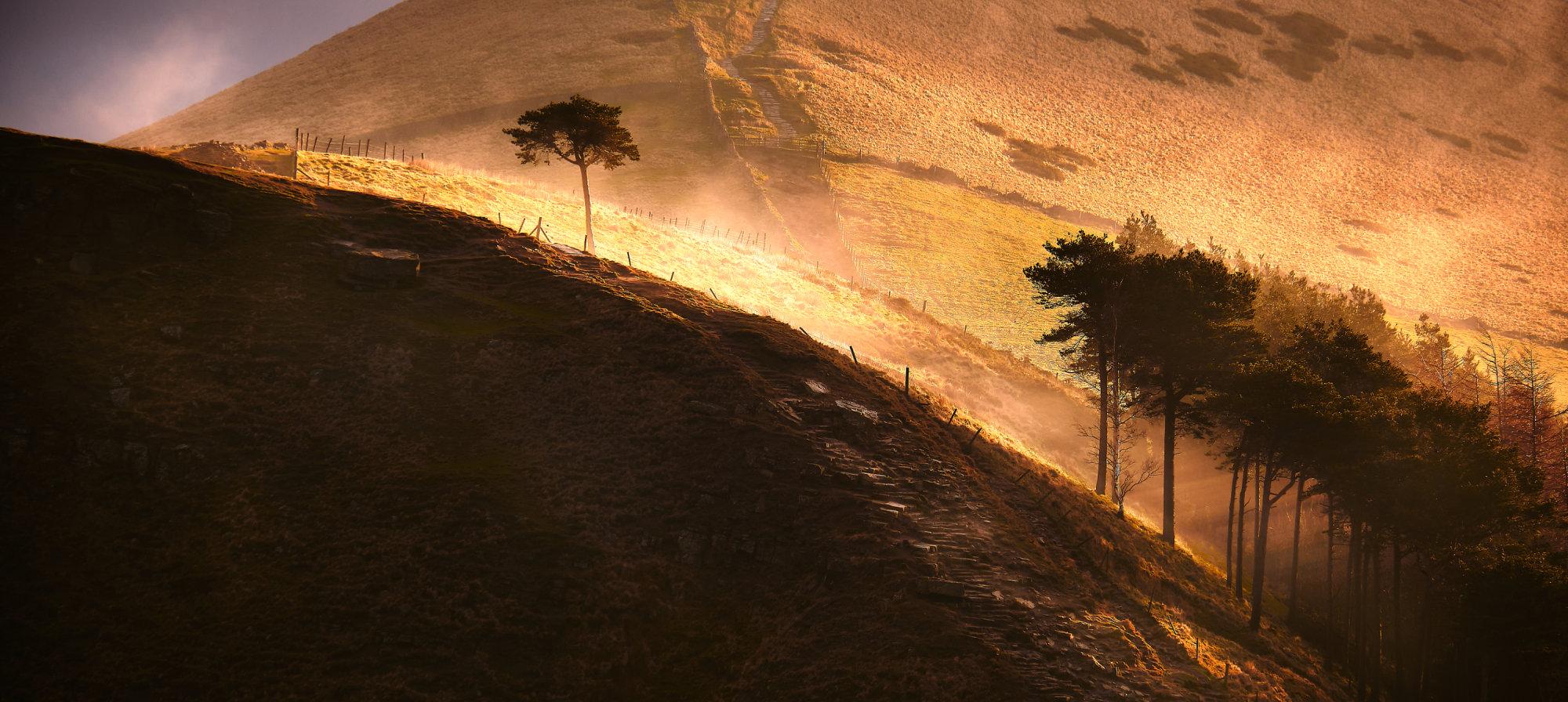 The single tree