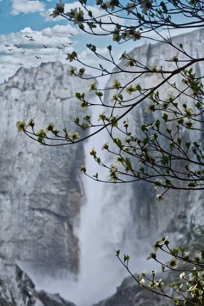 Springtime at Yosemite by john_w168