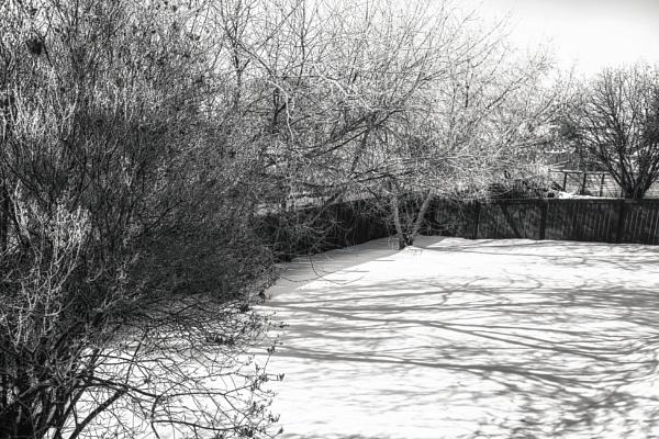 Backyard Shadows by FrancisChiles