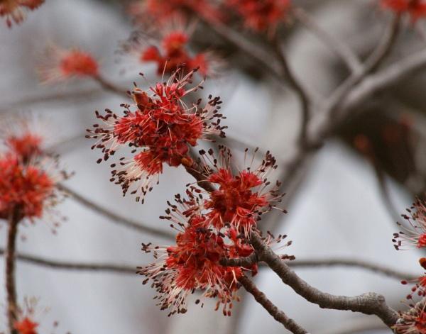 Orange Blossoms by gconant