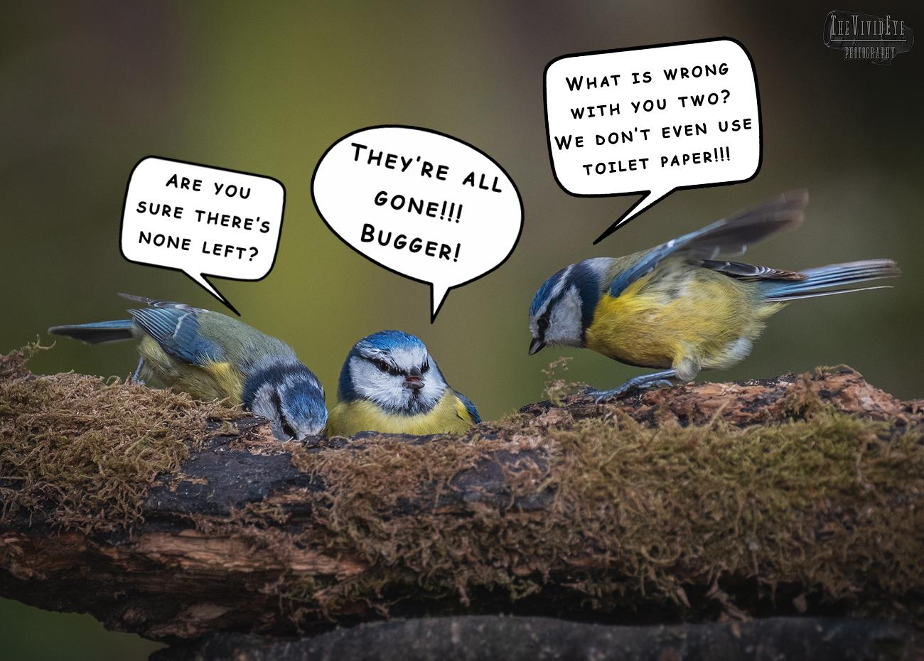 Madness hits the bird community...