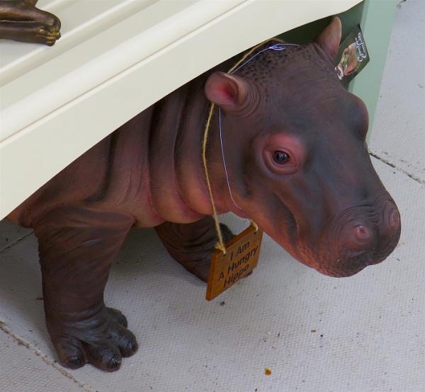 Self isolating Hippo by ddolfelin