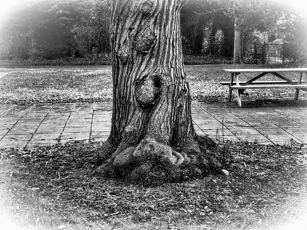 TREE. by kojack