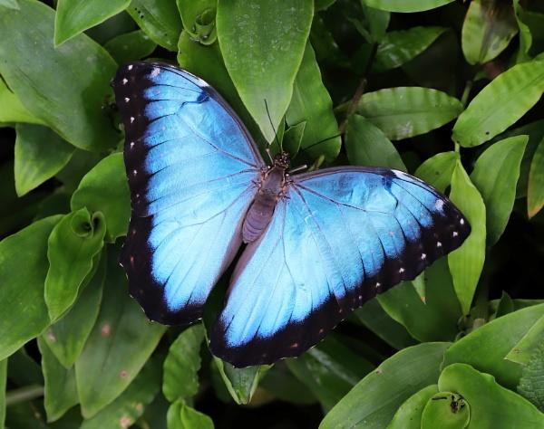 Blue Morph by Steveo28