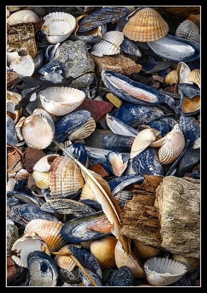 Beach debris by BiffoClick