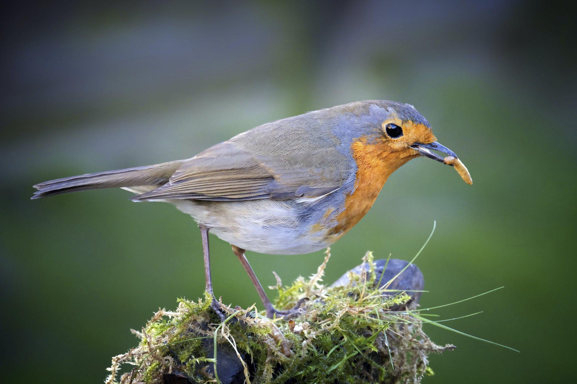 """""""Feed The Birds""""."""