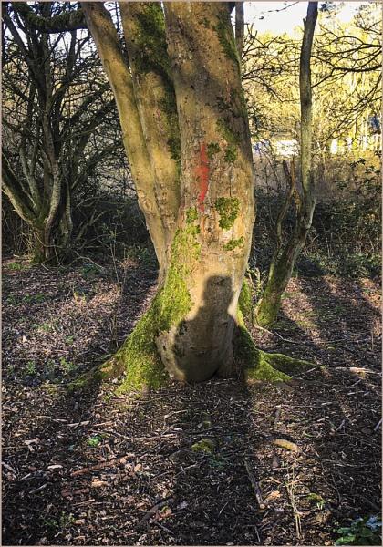 Me and Tree by AlfieK