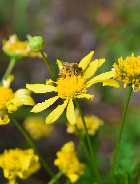 Only one flower per bee by littleflea