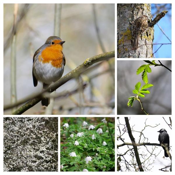 Happy Spring Equinox by wvbarnes