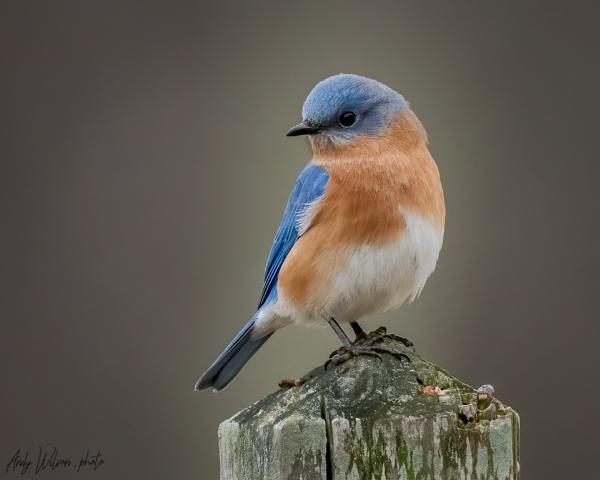 Bluebird by HoiPolloi