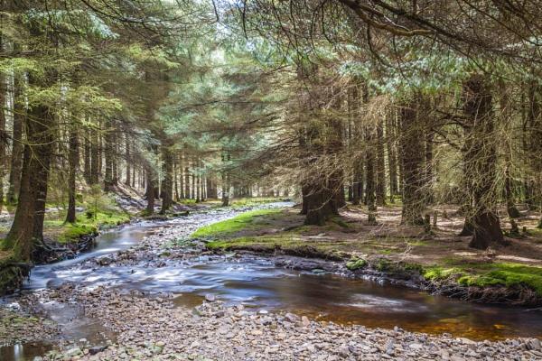 Woodland Stream by xbolt