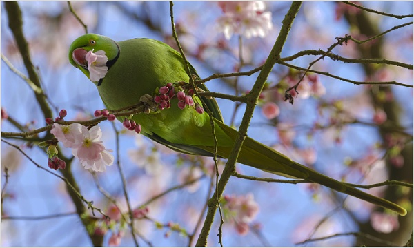 Hello Blossom by AnnetteK