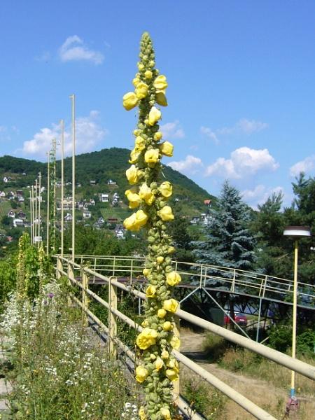 Unstrange flower by elousteve